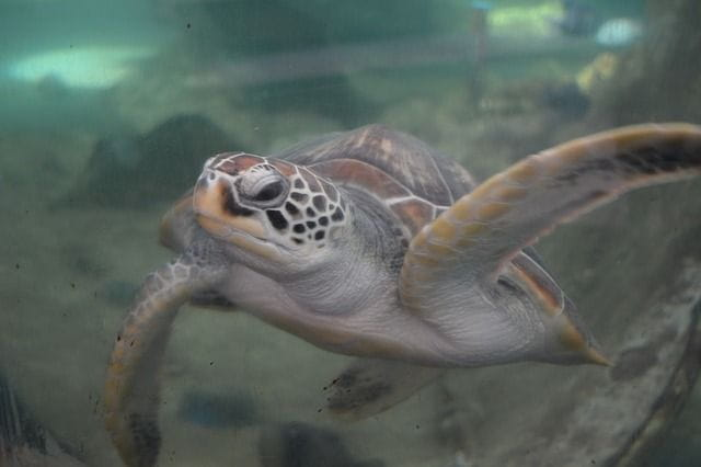 C'est une photo d'une tortue marine.